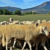 Museo del Ovino, o ser pastores por un día