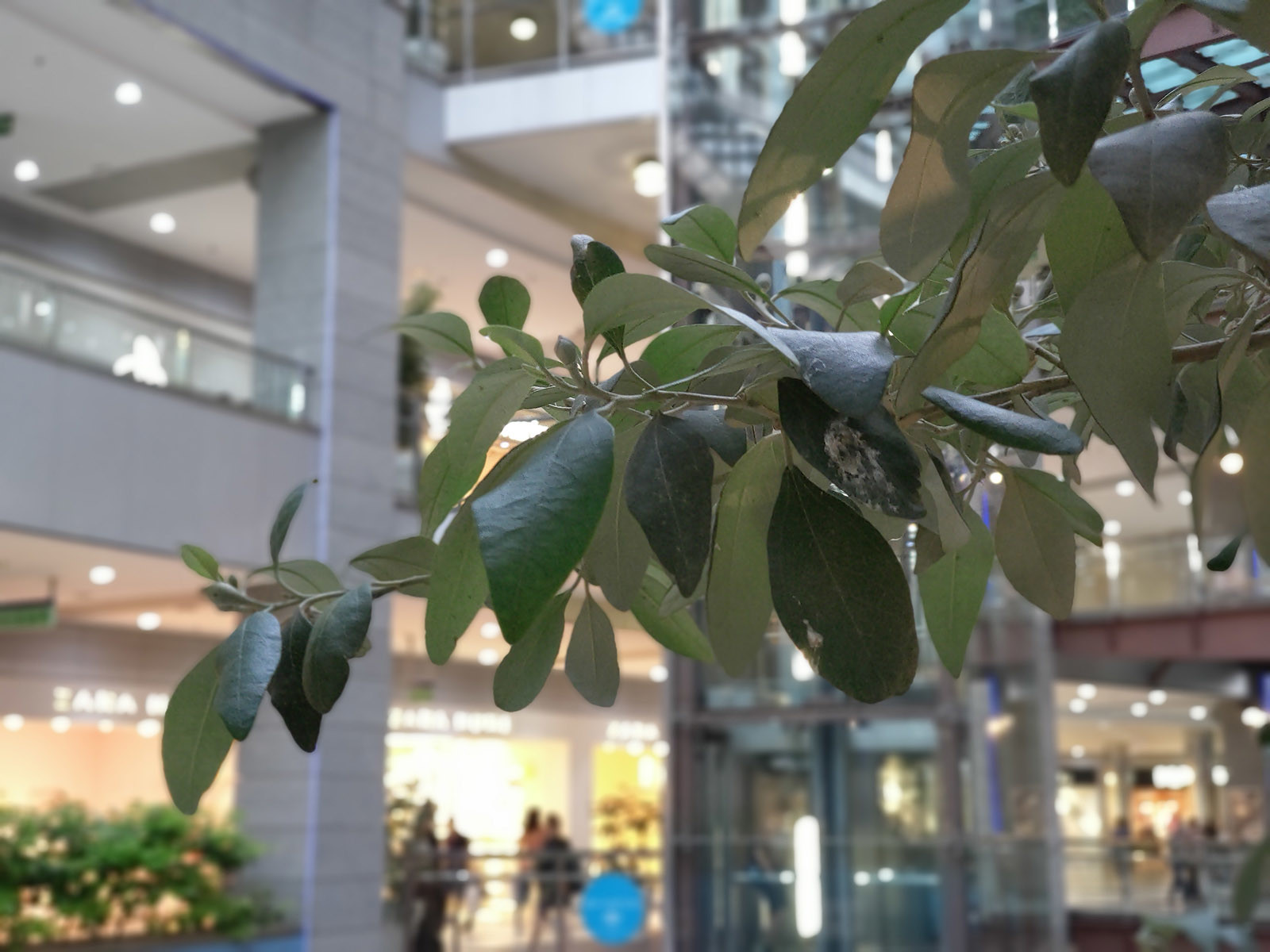 HTC U12+, galería fotográfica