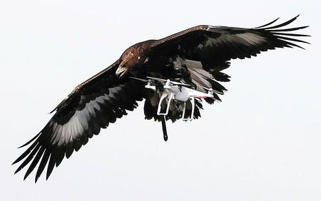 Drones vs águilas: el ejercito francés entrena a sus rapaces para derribar drones, lo vemos en vídeo
