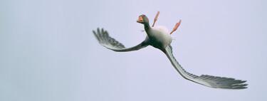 Esta curiosa foto de un ganso volando boca abajo que se ha hecho viral no es un fake ni tampoco está manipulada con Photoshop