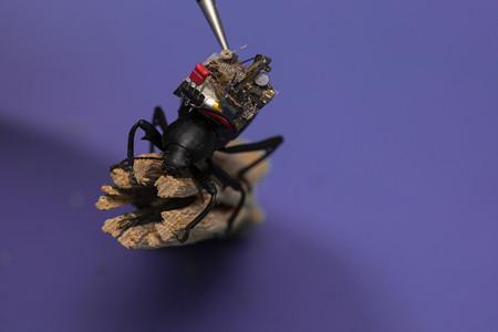 Beetlecameraweb009