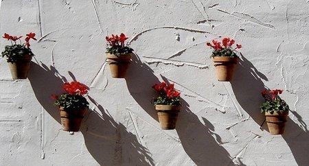 Macetas en Marbella