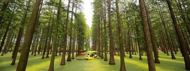 El bosque que en realidad es un lago y todos sus árboles están perfectamente alineados