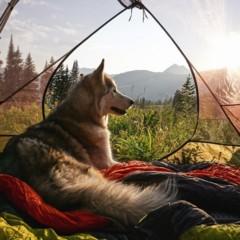Foto 4 de 9 de la galería loki-the-wolfdog en Diario del Viajero