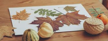 Un paseo de otoño: recolectamos hojas