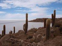 Paisajes impactantes: una isla de cactus en un desierto de sal