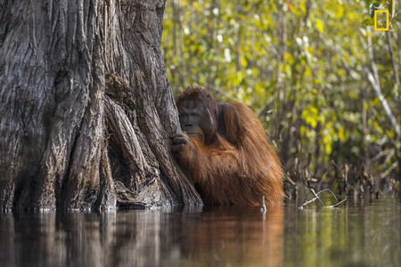 Ngnp Grandprize 1stplace Wildlife