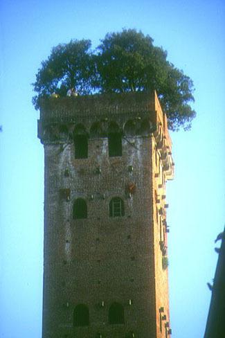 Torre dei Guinigi en Lucca