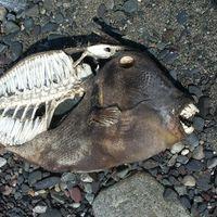 La próxima gran extinción ya está en marcha y en esta web la puedes seguir en directo