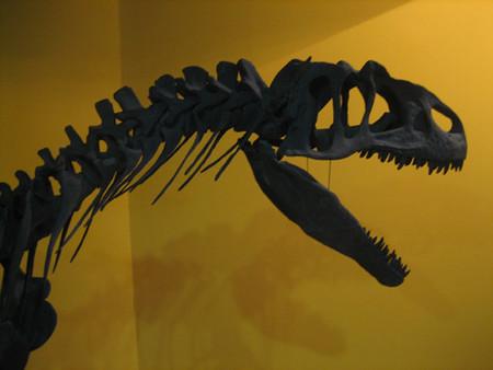 """""""Dinosaurios del Gobi"""", la mayor colección de fósiles en Madrid"""