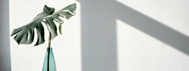 Seis plantas de interior con las que convivir este invierno en casa