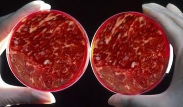 Carne de laboratorio, ¿una nueva alimentación para el mañana?