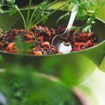 ¿Nos aportan las legumbres proteínas completas? Así puedes combinarlas para complementar tu dieta