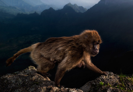 C Riccardo Marchegiani Wildlife Photographer Of The Year