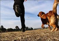 Haz ejercicio con tu mejor amigo