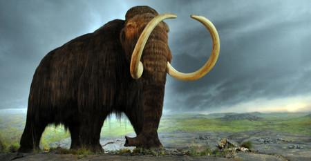 Investigadores encuentran muela de mamut en Gómez Palacio, Durango, México
