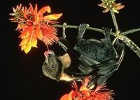 Ordenador imita habilidades del murciélago