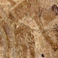 Evidencia de que la cocina se inventó hace más de 10.000 años