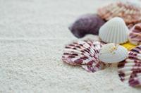 Las actividades más inolvidables en la playa con los niños