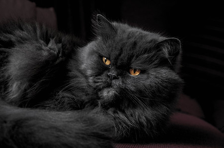 Como Fotografiar Mascotas I Gatos 6