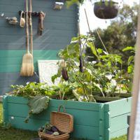 Plan huerto urbano: descubre la pasión de cultivar
