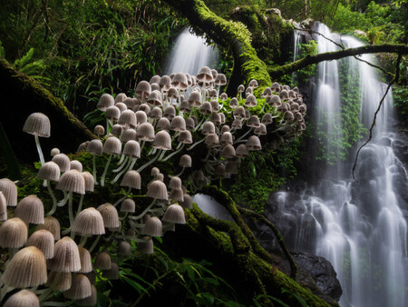 Npoty Photo Contest 2020 Enchanted Forest Kevin De Vree Runner Up C4 Plants And Fungi