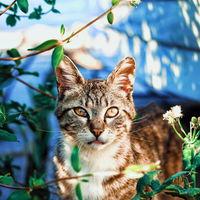 """Qué tiene de especial la hierba de gatos, la """"droga"""" natural capaz de colocar a tu mascota"""