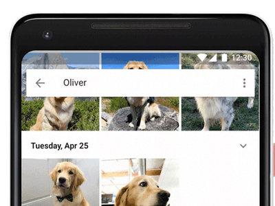 Ya puedes identificar a tus mascotas en Google Fotos