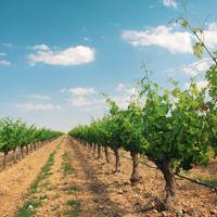España, el líder mundial de vino y aceite al que nadie quiere comprar fuera