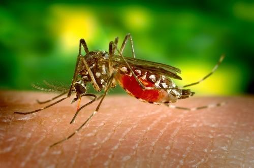 ¿El final del dengue? Varios países ya han aprobado la nueva vacuna