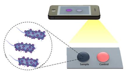 Así es cómo la cámara del móvil puede ayudar a diagnosticar peligrosas enfermedades infecciosas