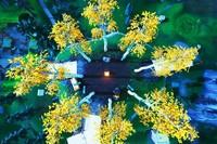 Desafío Fortnite: aterriza en Pico Polar, un volcán y en una montaña con un círculo de árboles. Solución