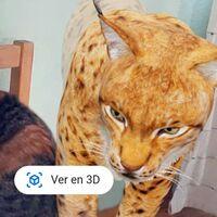 Pon un lince en tu casa gracias a Google: éste y otros animales en extinción ya en 3D