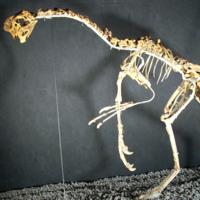 Se encuentra el primer especimen de dinosaurio del mundo sentado en un nido de huevos con crías fosilizadas