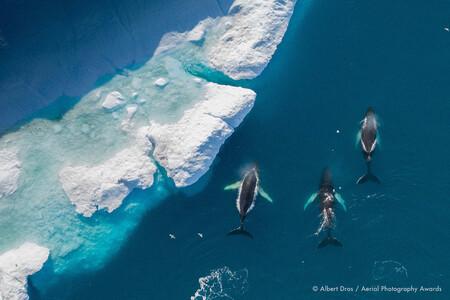 The Humpbacks Albert Dros Aerial Photography