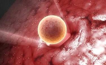 El 90% de los óvulos han desaparecido a los 30 años