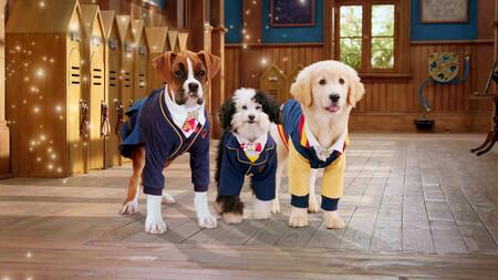 Academia Cachorros