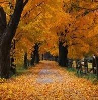 Fracasan los estrenos de otoño