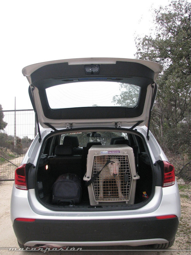 Foto de Transporta correctamente a tu mascota (10/11)