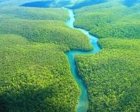 [Vídeo] La Flora de Brasil a un sólo click
