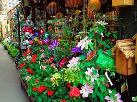 El Mercado de las flores y los pájaros en París, un paseo de color y aromas para los sentidos