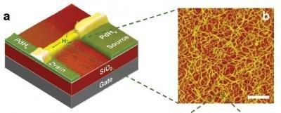 Un nuevo transistor basado en protones para interactuar con seres vivos