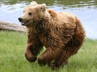Un conductor noruego hace una 'prueba del alce' en serio y atropella un oso