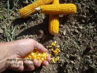 Greenpeace advierte del peligros de los OMG