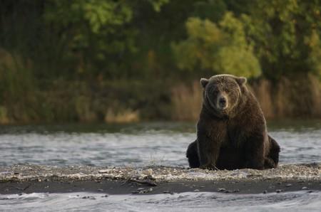 Bear 2095379 1280
