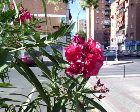 foto-flor.jpg