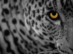 Mac OS X Leopard para Marzo... ¿Será verdad?