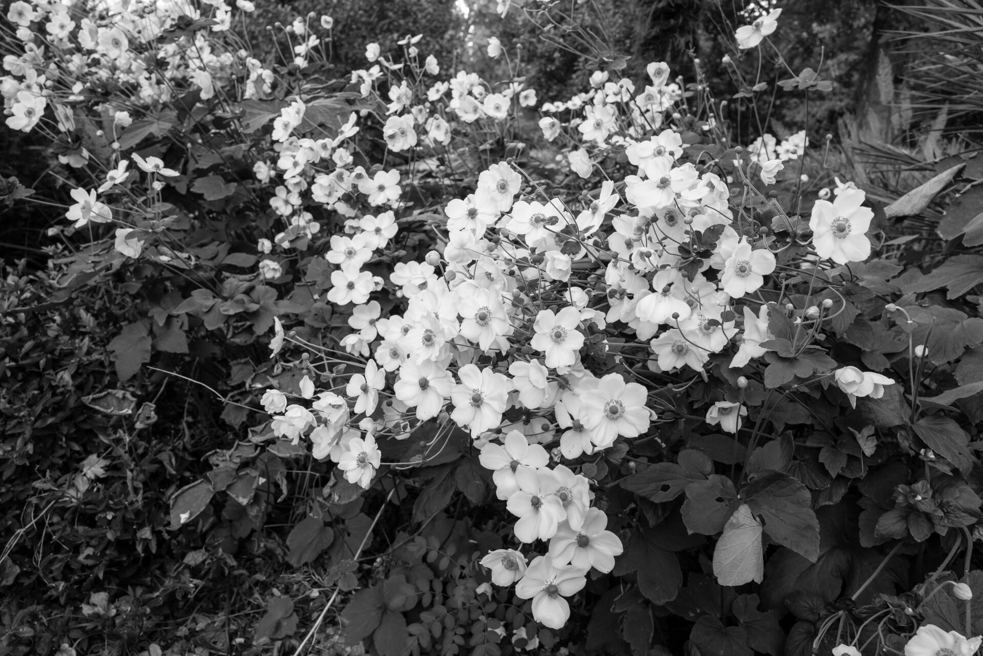 Foto de Fotografías Leica Q2 Monochrom (27/31)