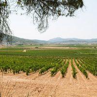 El mejor vino relación calidad-precio del mundo es de Alicante: Artadi El Sequé