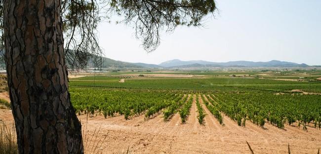 Vinedos Seque
